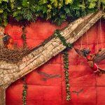 Ntembe, sparrowhawk Walé